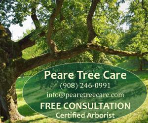 Tree Service Branchburg
